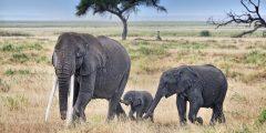 ما اسم ولد الفيل