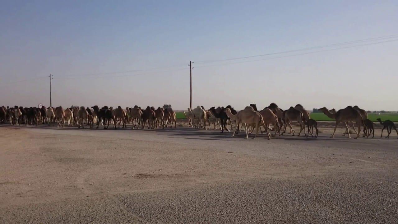 مدينة حرض السعودية